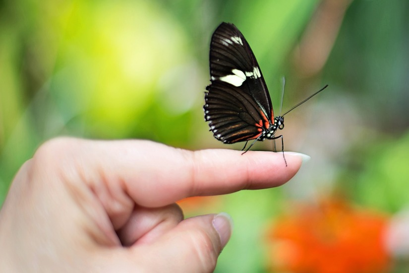 butterfly-on-finger-1278813_1920